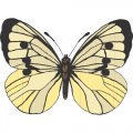 Butterfly DIY iron on stickers (heat transfer) version 7
