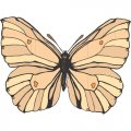 Butterfly DIY iron on stickers (heat transfer) version 10
